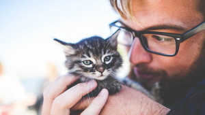 acariciador de gatos en irlanda